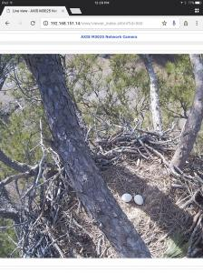 We have eggs at the eagle nest