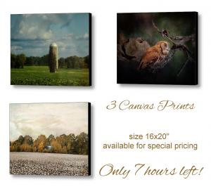 3 Canvas Prints Available on Special Promotion - 7 Hours Left