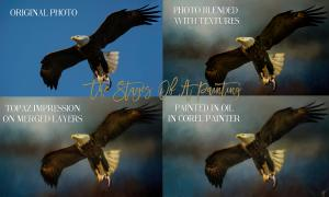 The Stages of A Wildlife Painting